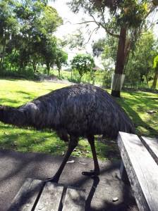 Emu Tower Hill
