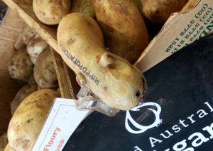 Hippo potato