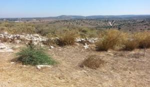 Tel Maresha unprepossessing scenery